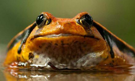 De amfibie facilitator